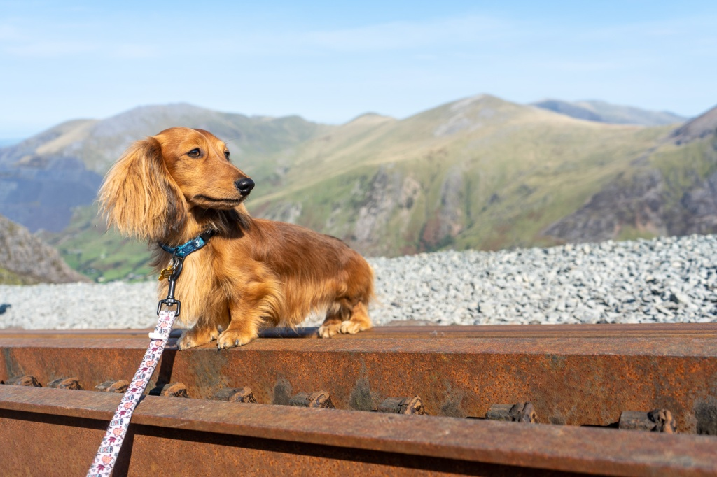 Chester stands next to a railway track on Mount Snowdon