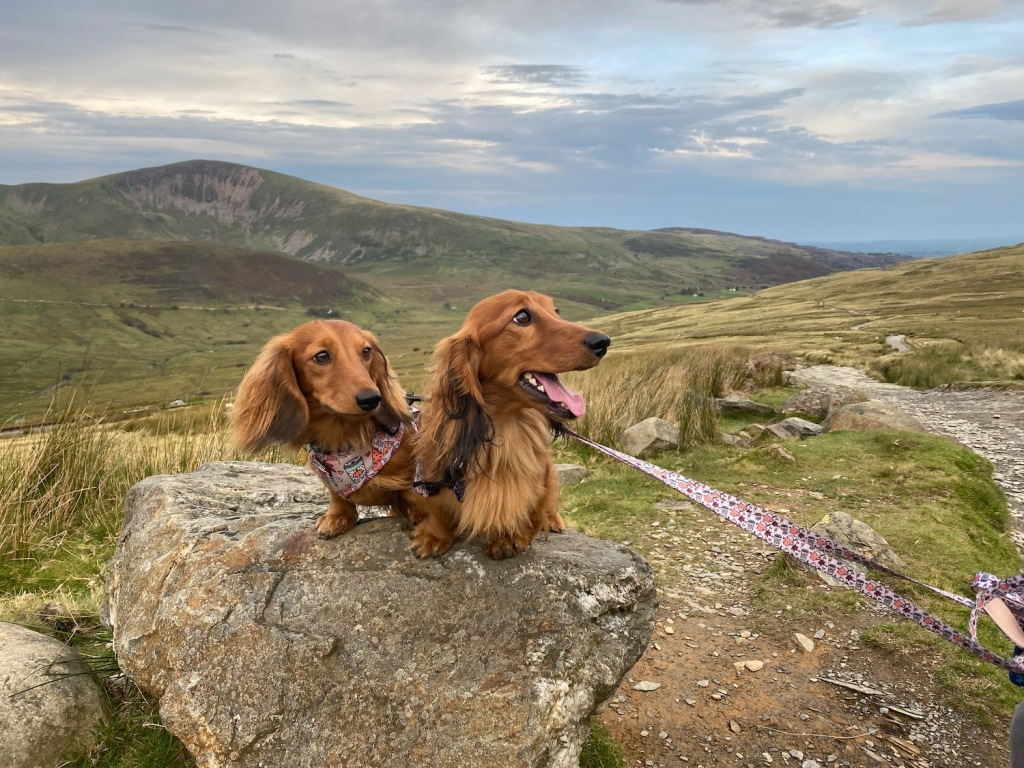 Cheddar and Chester happily pose in front of the sunrise view